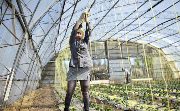 Trabajadora búlgara en un invernadero de Valladolid./R. V. J.
