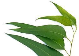 Plantas para la garganta